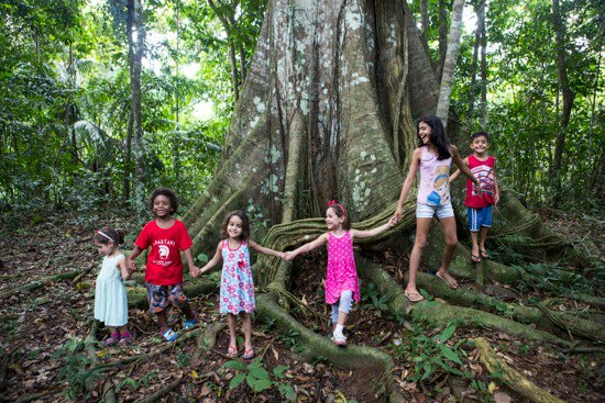 Meeting the Samauma, the largest tree of the rainforest