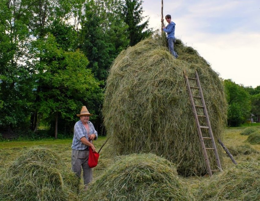 making haystacks wildschooling in summer